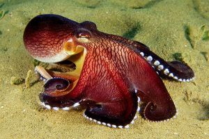 octopus-coconut_10552_600x450